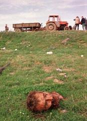 Krigen i jugoslavien 1990